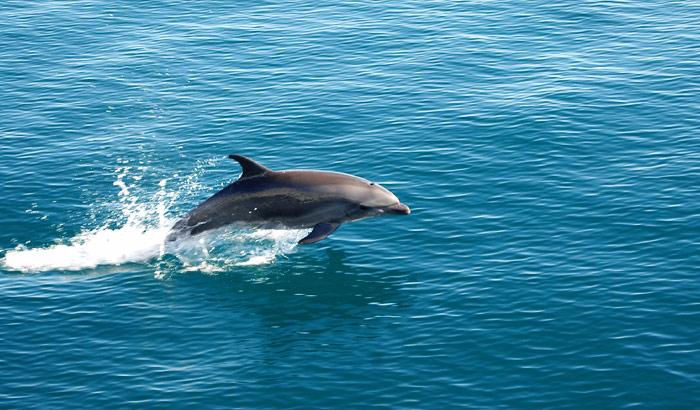 Dolphin Spotting In Goa