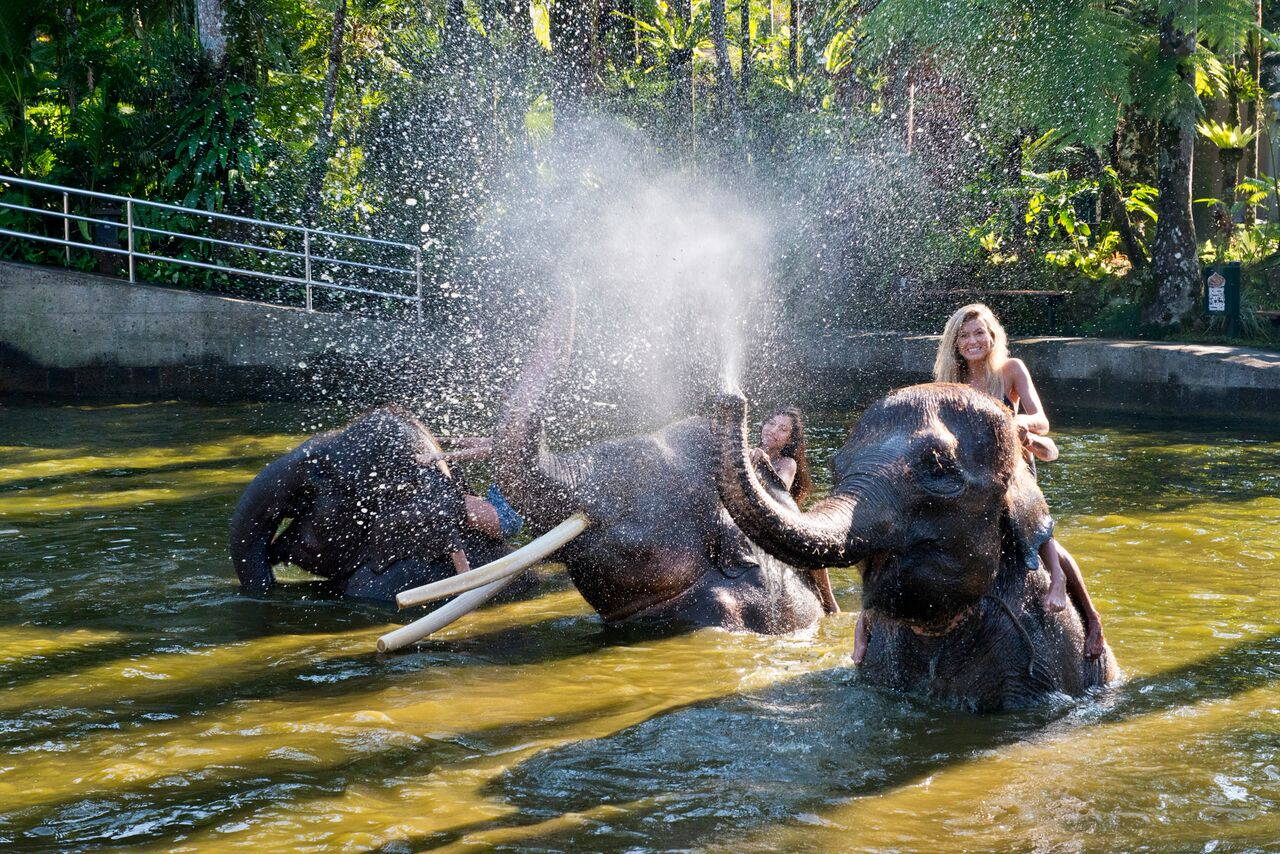 Bath & Breakfast With Elephants & Whitewater Rafting