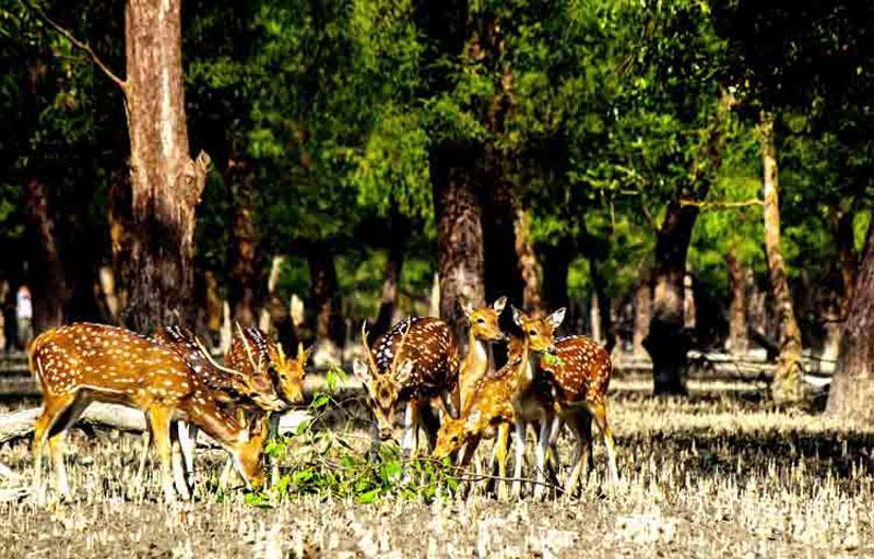 Excursion To Sunderbans With Jungle Safari