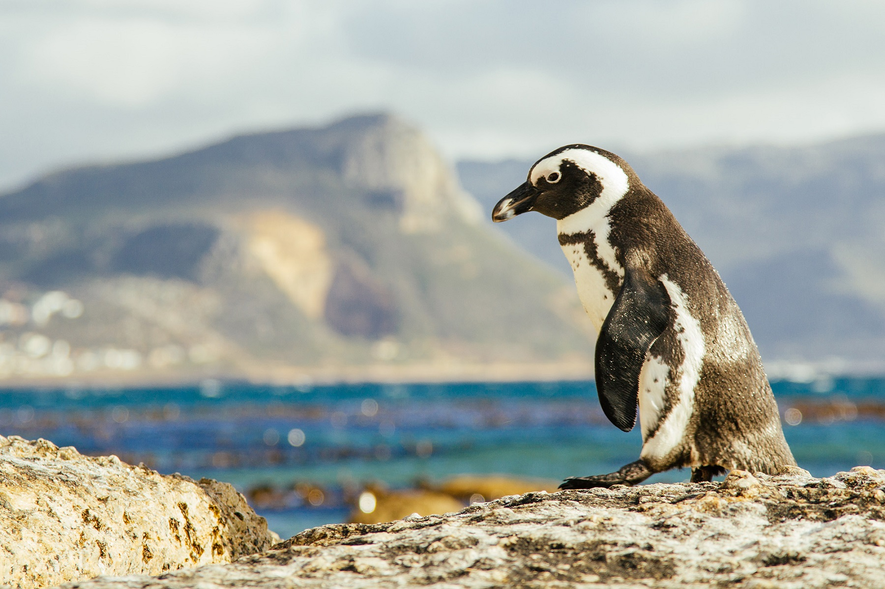 places-to-visit-and-things-to-do-in-cape-town-for-honeymoon-leamigo